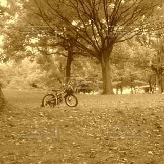 自転車,屋外,景色,樹木,セピア,車両,ホイール,陸上車両,自転車のホイール
