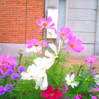 花,屋外,ピンク,トイカメラ,草木,ガーデン