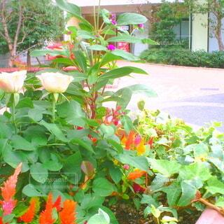 花,屋外,樹木,植木鉢,トイカメラ,草木,ガーデン