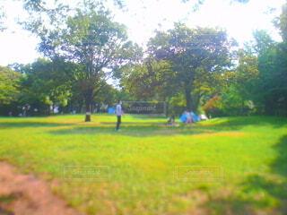空,公園,屋外,草原,草,樹木,遊び場,トイカメラ,草木
