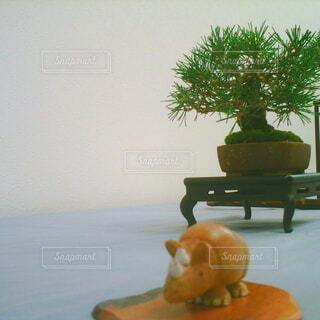 サイと盆栽の写真・画像素材[4951543]