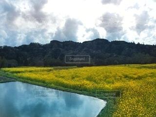 黄色の絨毯の写真・画像素材[4867915]