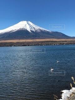 富士山と白鳥の写真・画像素材[4875787]