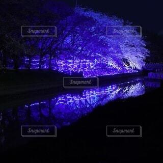水面に映る夜桜の写真・画像素材[4871185]