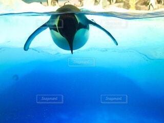 水平線ペンギンの写真・画像素材[4869229]