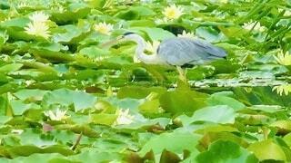 鳥の写真・画像素材[4873083]