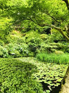 緑の写真・画像素材[4873092]