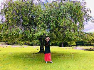 大きいな木とたかいたかいの写真・画像素材[4873086]