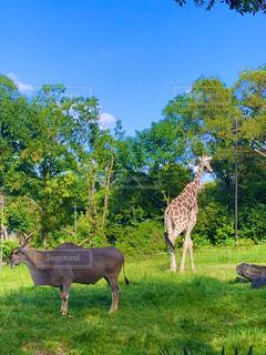動物園の一コマの写真・画像素材[4875048]