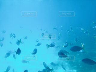魚の群れの写真・画像素材[4875869]