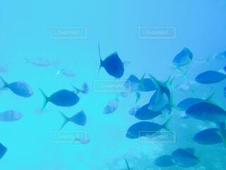 水中の写真・画像素材[4875866]