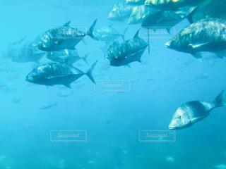 海の中の写真・画像素材[4875870]