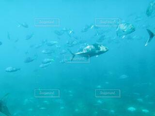 水の中の写真・画像素材[4875867]