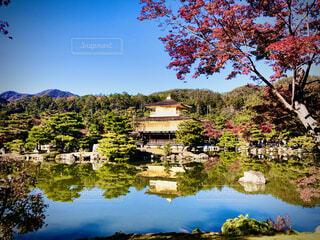 紅葉と金閣寺の写真・画像素材[4878353]