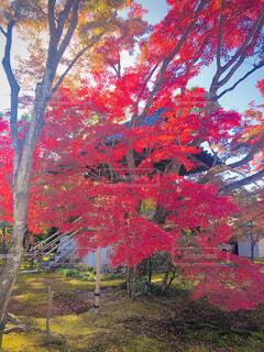 秋,紅葉,屋外,緑,赤,葉,もみじ,景色,草,樹木,大地,草木,カエデ,秋の訪れ,赤い葉っぱ