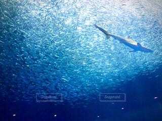 小魚とサメの写真・画像素材[4878504]