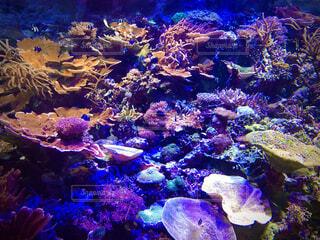 海底サンゴの写真・画像素材[4878503]
