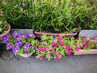 おばあちゃん家の花の写真・画像素材[4880078]