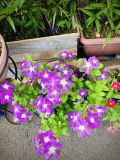 おばあちゃん家の花の写真・画像素材[4880077]