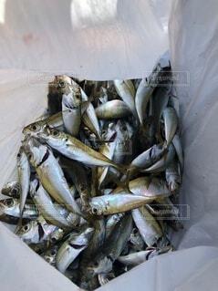 魚の山の写真・画像素材[4874149]