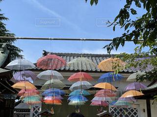 傘の写真・画像素材[4874170]