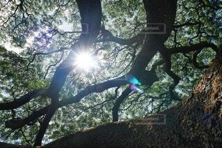 森の中の大きな木の写真・画像素材[4868879]