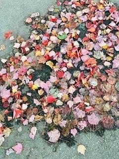 公園の落ち葉の写真・画像素材[4869803]