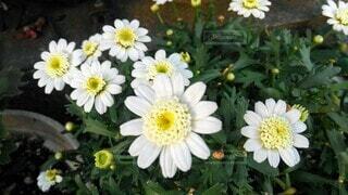 花,屋外,白い花,草木,野花