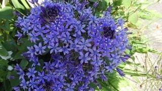 花,緑,青,紫,ラベンダー,草木