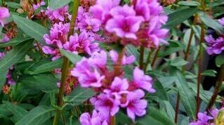 花,屋外,ピンク,草木,フローラ