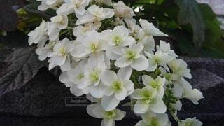 花,花束,あじさい,草木,ブルーム
