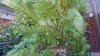 草木,フローラ,陸生植物,維管束植物