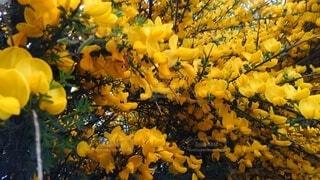 花,秋,黄色,葉,草木