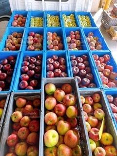 色々な秋のりんご勢揃いの写真・画像素材[4889587]