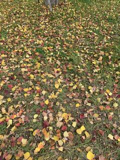 落葉の写真・画像素材[4871404]