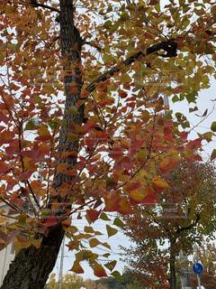 木のクローズアップの写真・画像素材[4871402]