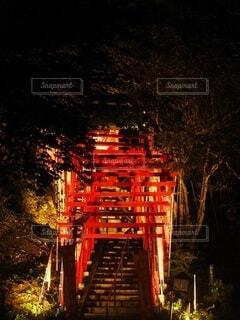 自然,夜,屋外,赤,樹木,ライトアップ,明るい,景観