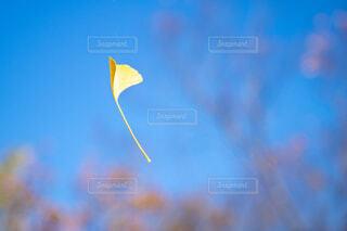 舞い散る秋の写真・画像素材[4872376]