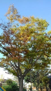 大きな木の写真・画像素材[4895393]