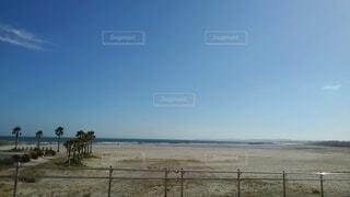 砂浜の上に立つキリンのグループの写真・画像素材[4918650]