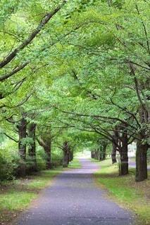 道路の脇に木がある道の写真・画像素材[4872756]