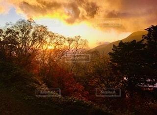背景に夕陽のある樹の写真・画像素材[4875670]
