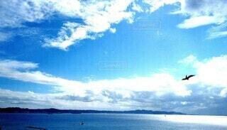 空と鳥と海の写真・画像素材[4873323]