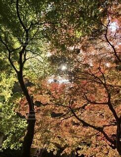 紅葉の中の光の写真・画像素材[4875901]