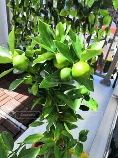 食べ物,果物,野菜,草木,ガーデン,リンゴ,果樹