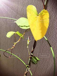 花のクローズアップの写真・画像素材[4922884]