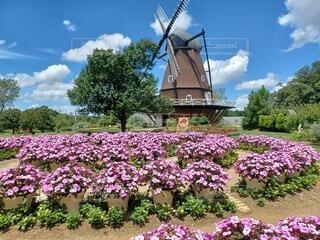 風車とお花畑の写真・画像素材[4874643]