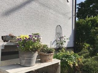 小さなお庭に咲く花たちの写真・画像素材[4881201]