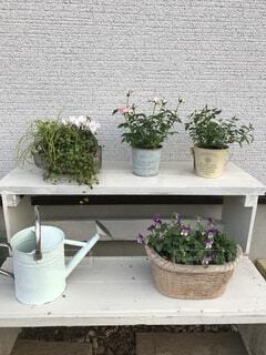 手作りの棚の上にお気に入りの寄せ植えとジョーロの写真・画像素材[4936529]