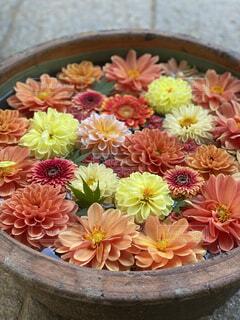 秋の花手水の写真・画像素材[4942723]